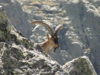 2011 08 23 29 ibex
