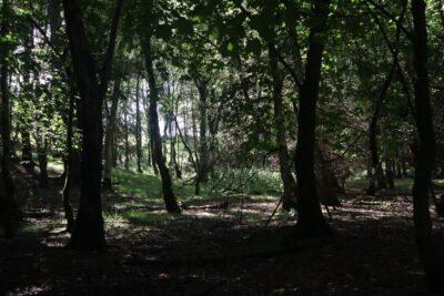 Wycoller woodland